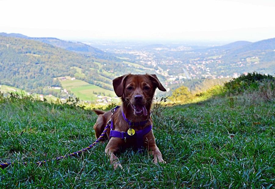 Pies naszlaku. Wycieczka zpsem wgóry.