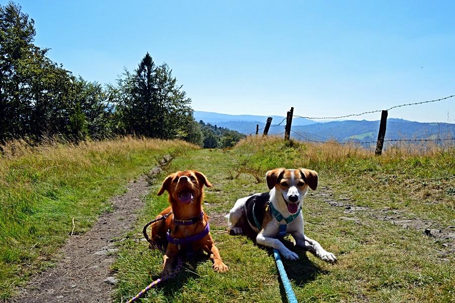 Psy na szlaku