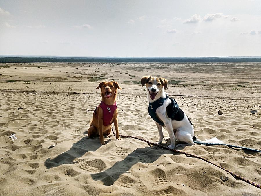 psy na pustyni błędowskiej