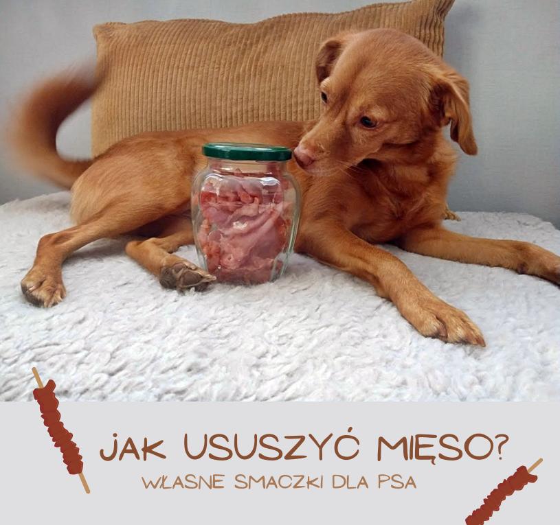 smaczki dla psa